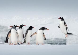 Antarctica Holidays