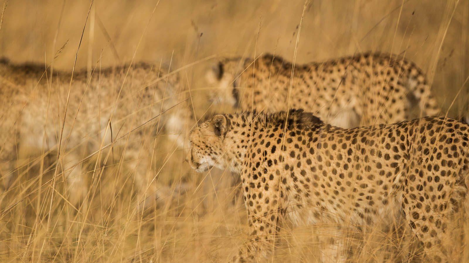 Zambia Holidays | Zambia Safari Tours & Rates | Africa Odyssey