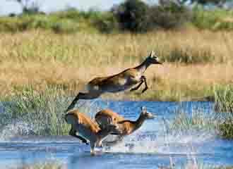 Botswana Classic 2