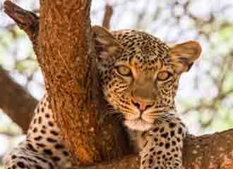 Zambia Premier 1