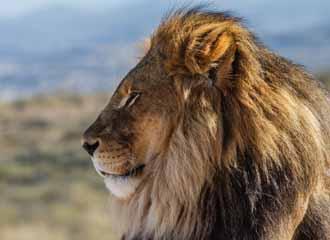S Africa Adventure 1