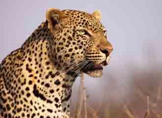S Africa Adventure 2
