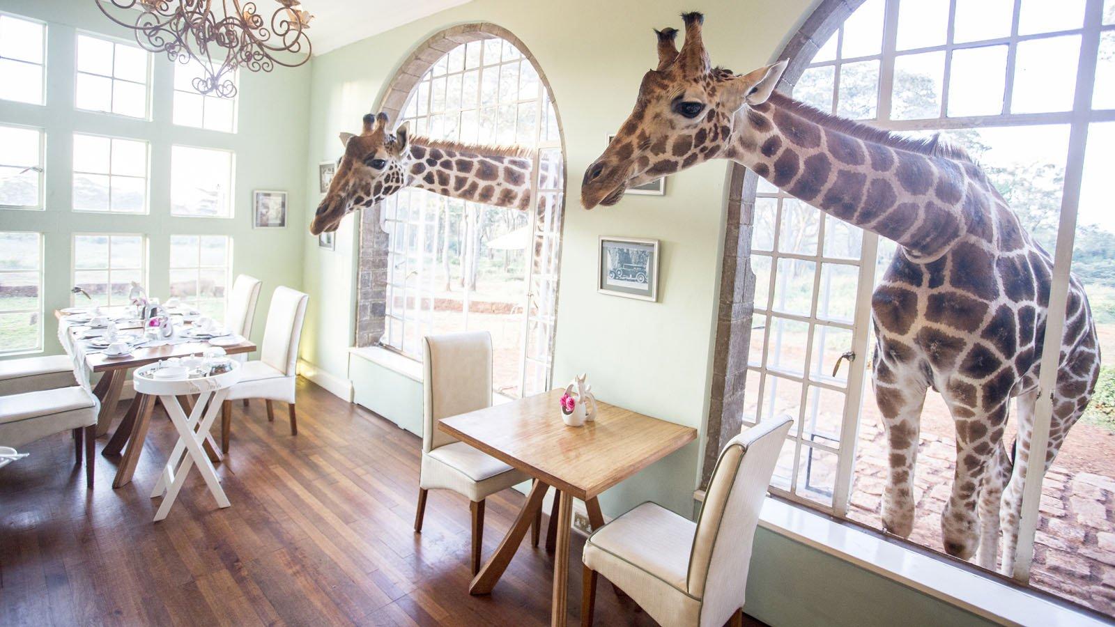 Giraffe Manor Nairobi | Kenya | Africa Odyssey