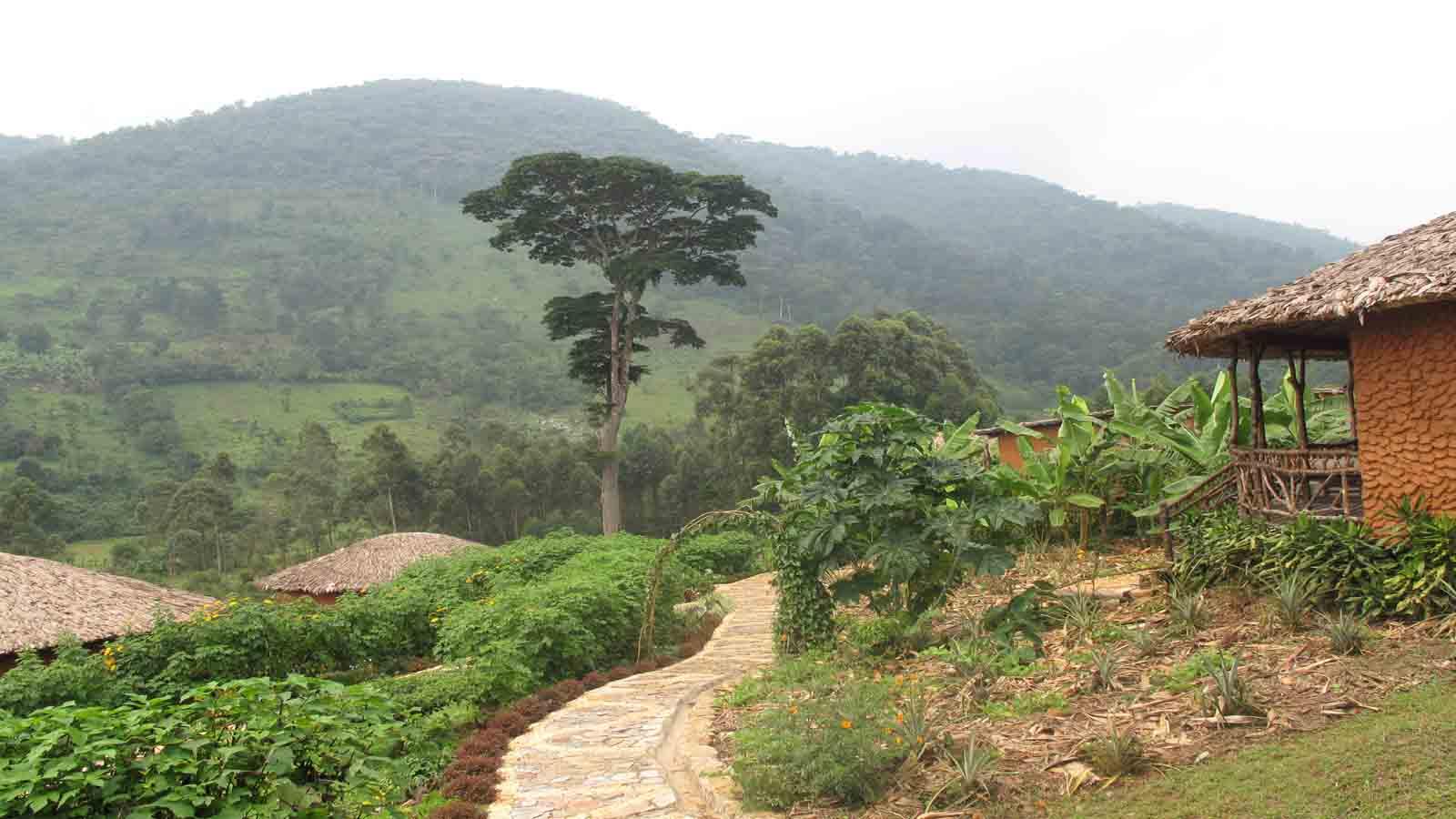 Bwindi Lodge - 2