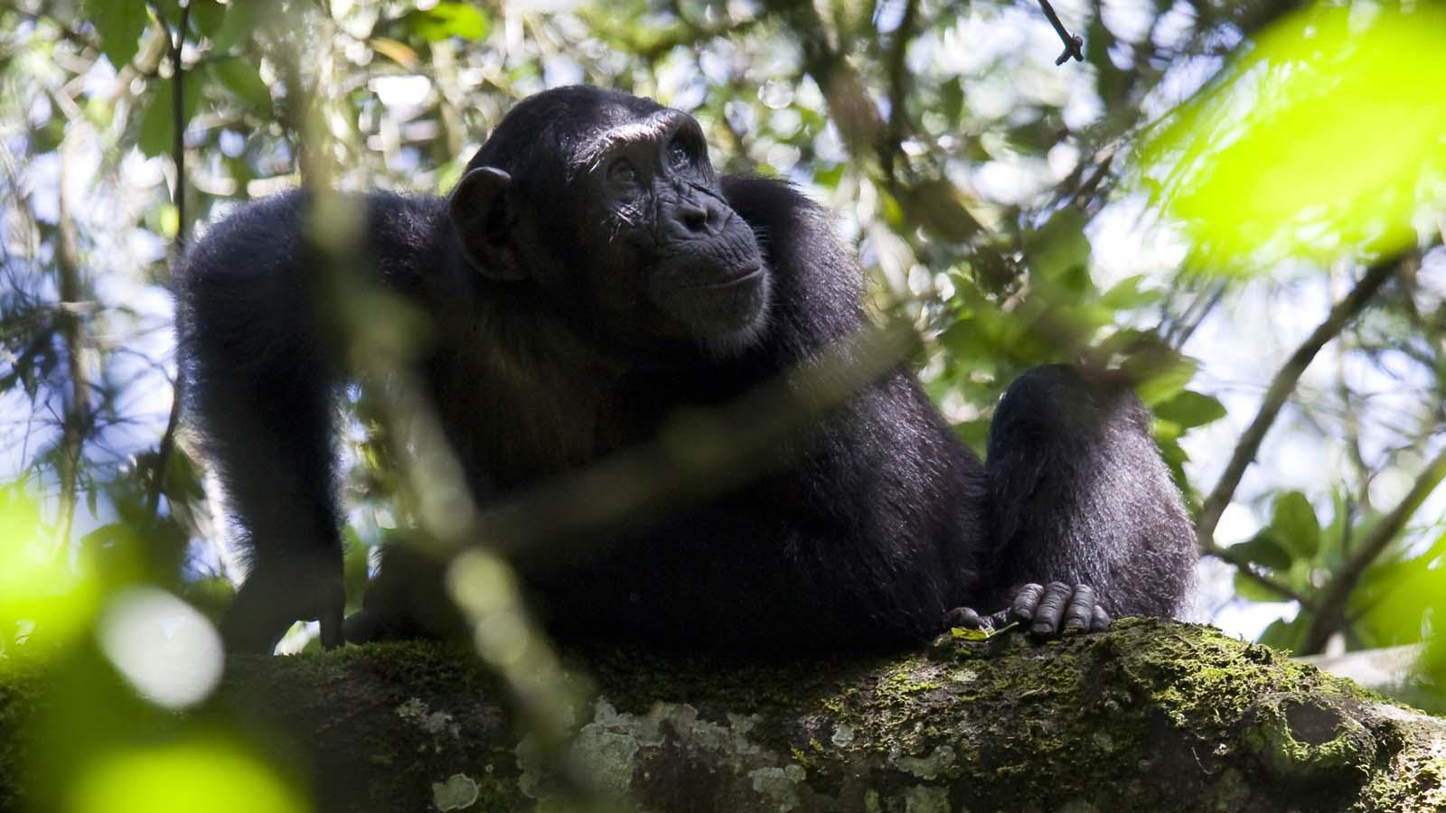 Primate Lodge - 3