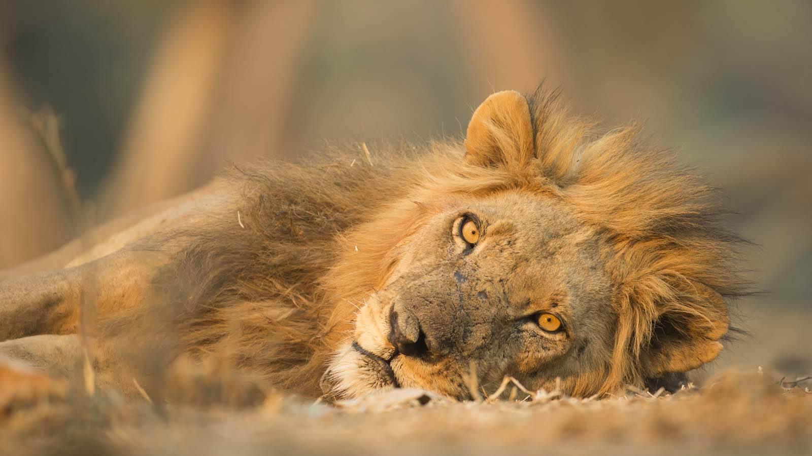 Safari Holidays and African Safaris | Africa Odyssey