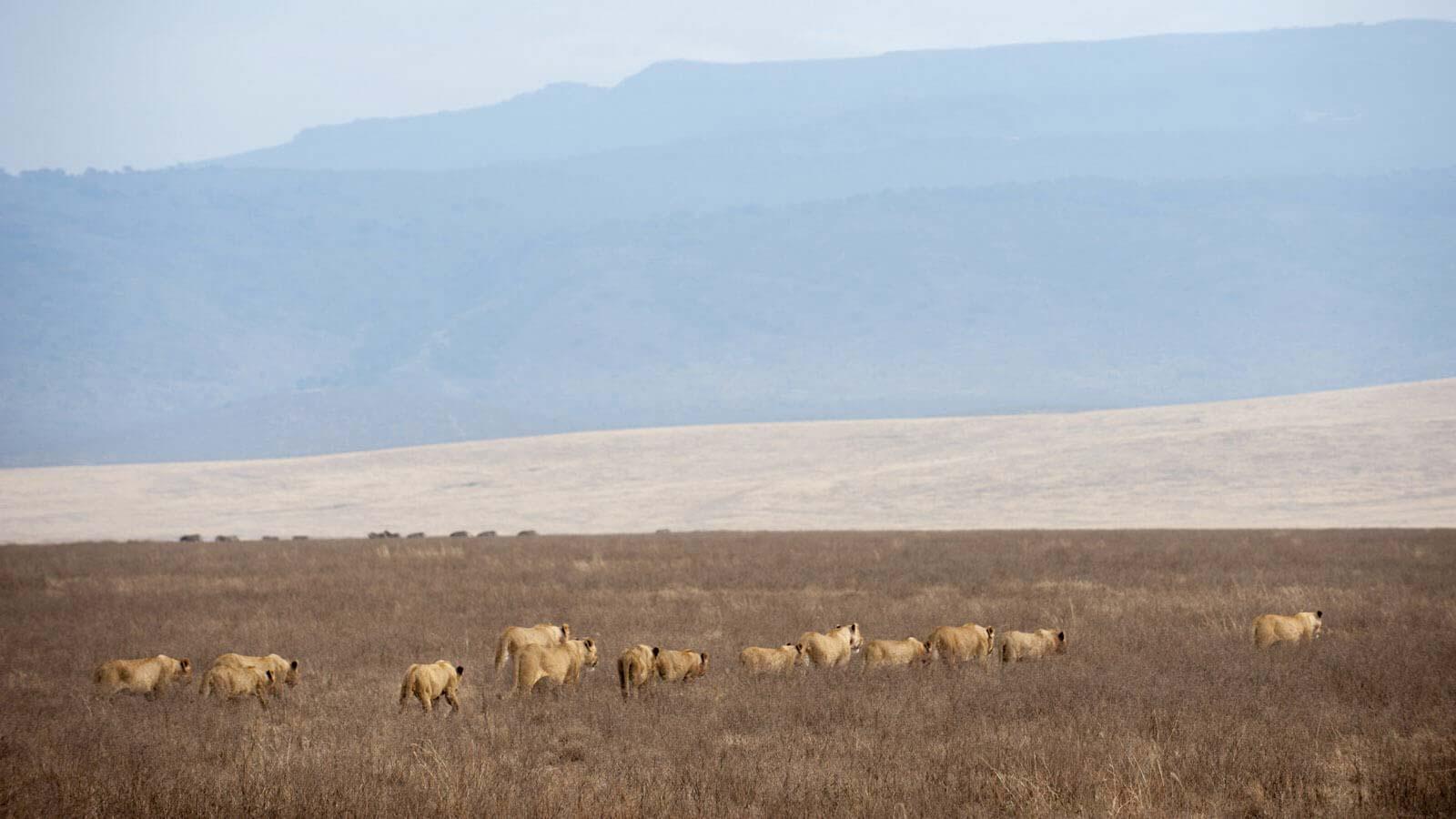 Official Tanzania Safari | Luxury Tanzania Safari Tours