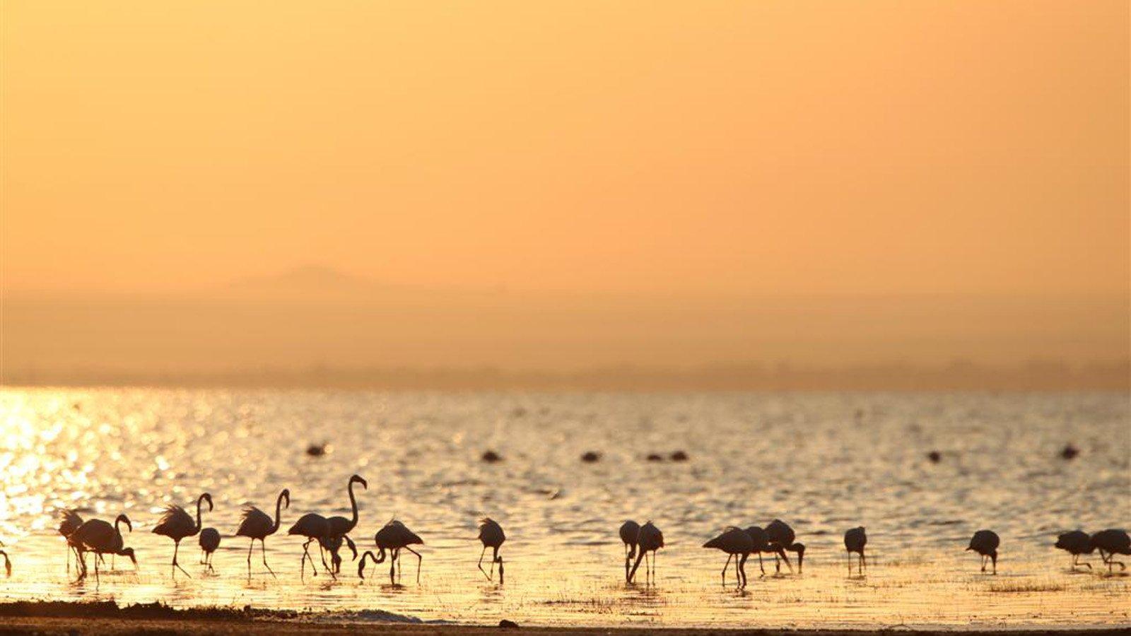 Lake Manyara - 3