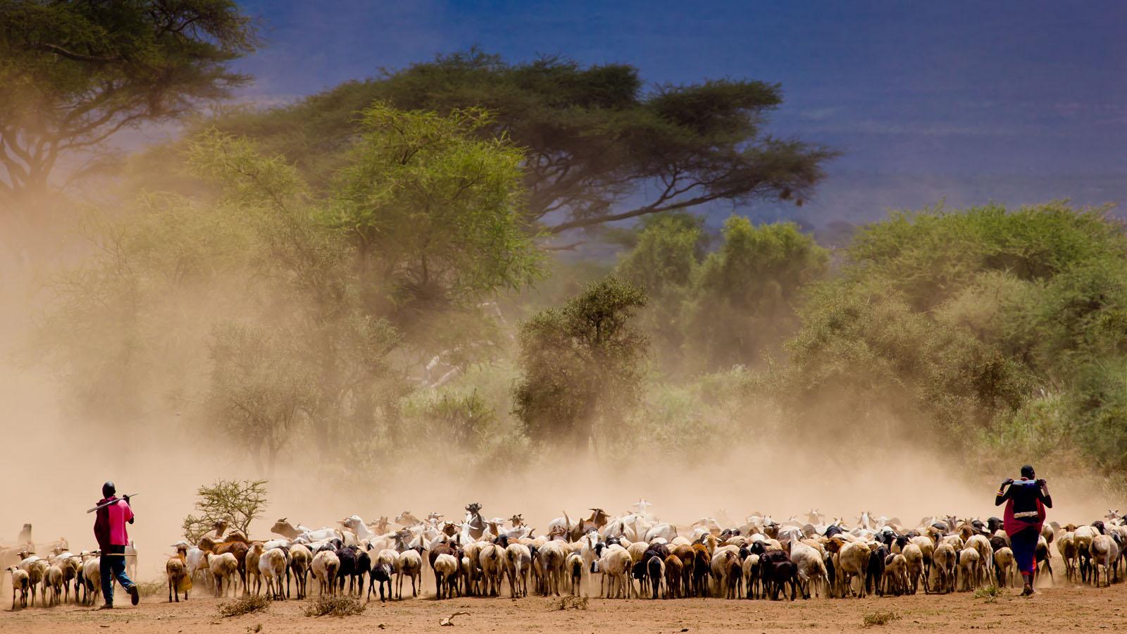 Ngorongoro Highlands - 3