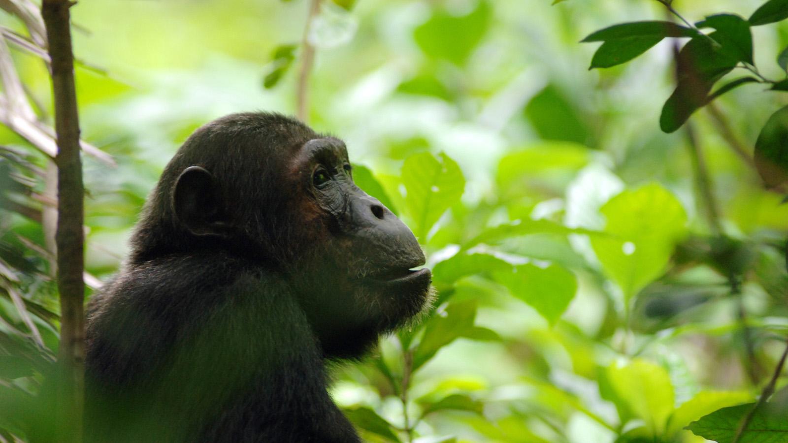 Nyungwe Forest - 5