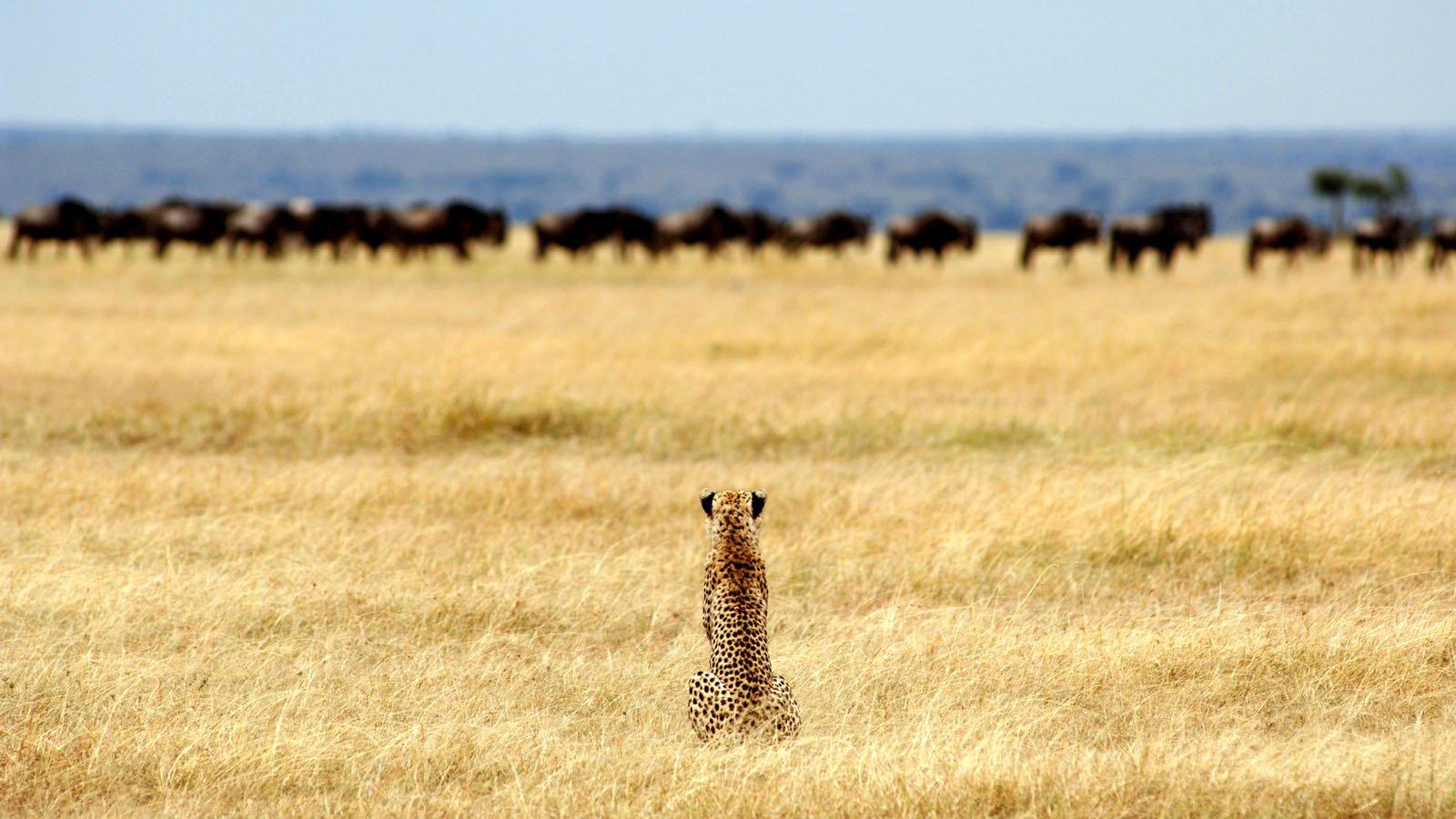Serengeti Safaris - 9